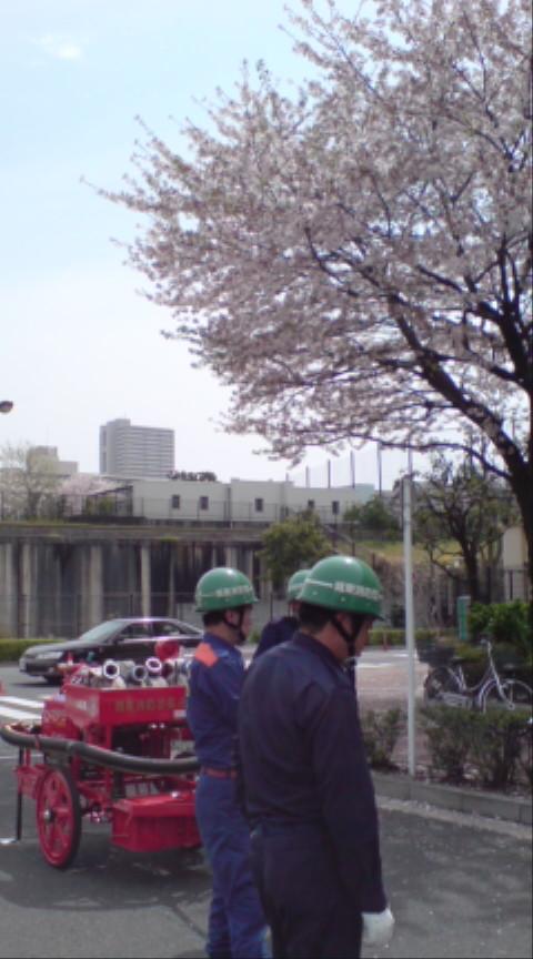 桜と消防団
